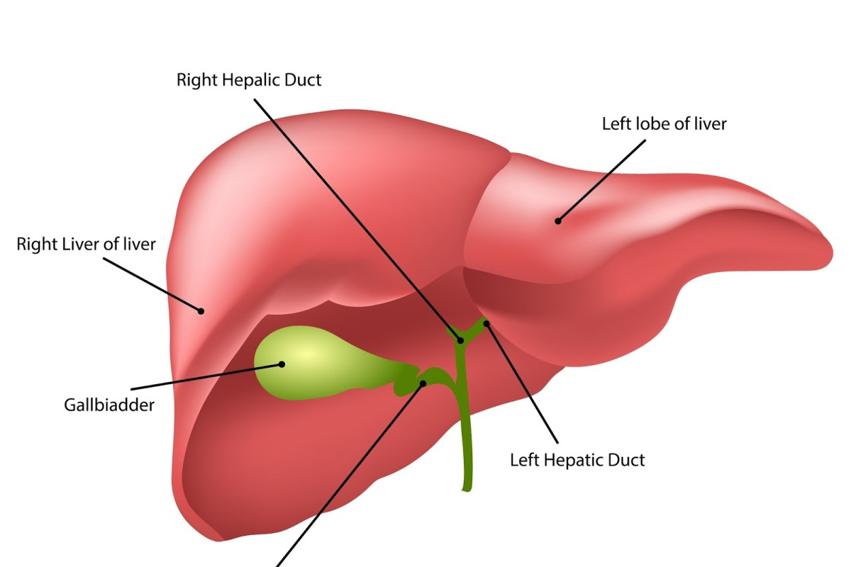 Liver Function Tests: A Healthy Liver For A Healthy Life