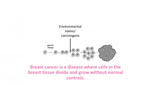 Breast Cancer: what does it mean
