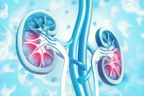 World Kidney Day 2019: Kidney Transplant