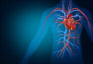 Guidelines to prevent Cardiovascular Diseases | Narayana Health