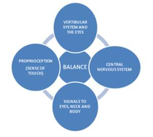 Human balance system
