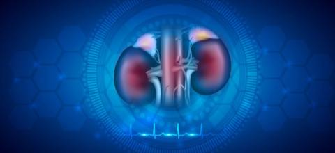 https://www.narayanahealth.org/blog/what-work-do-the-kidneys-do/